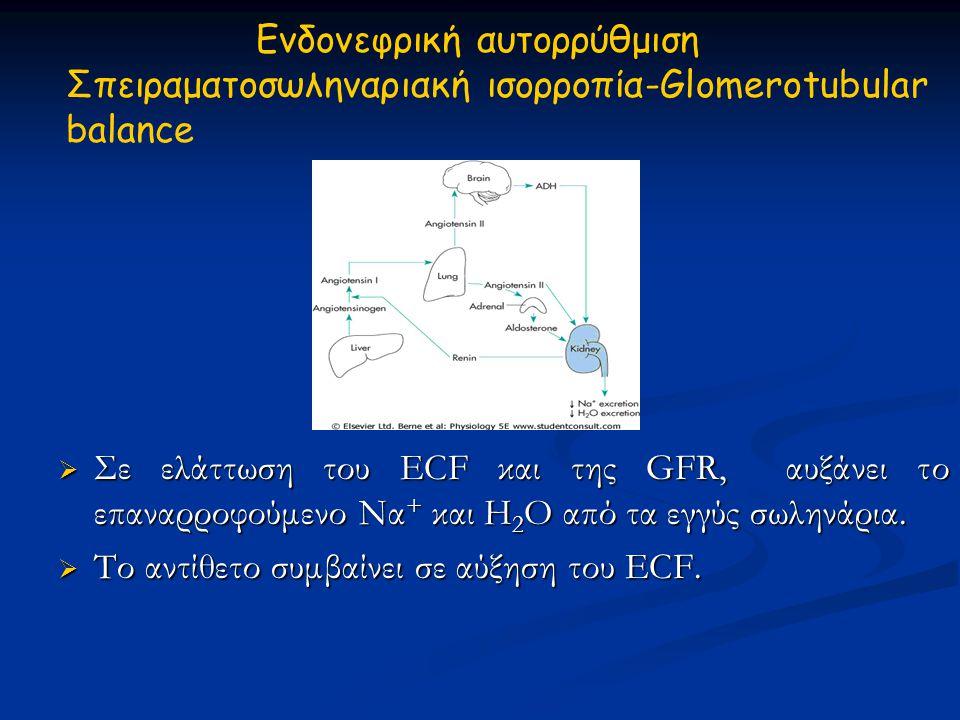 Ενδονεφρική αυτορρύθμιση Σπειραματοσωληναριακή ισορροπία-Glomerotubular balance