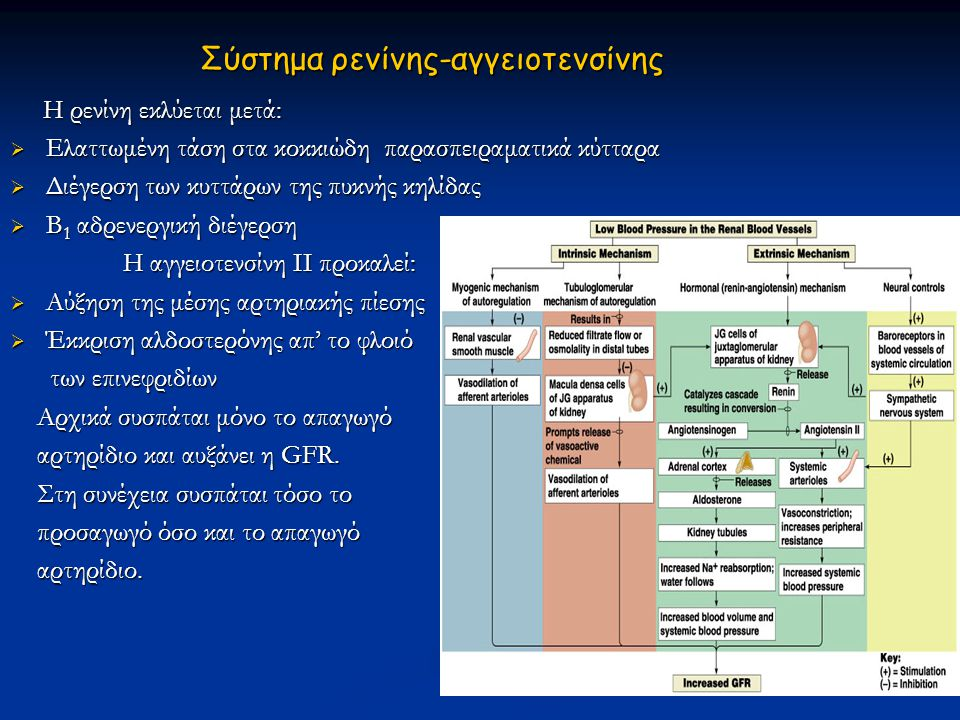 Σύστημα ρενίνης-αγγειοτενσίνης