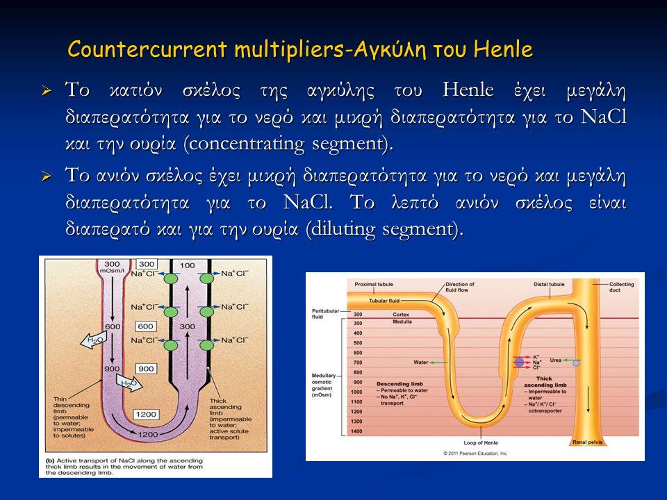 Countercurrent multipliers-Αγκύλη του Ηenle
