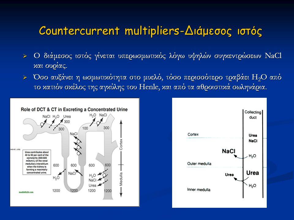 Countercurrent multipliers-Διάμεσος ιστός