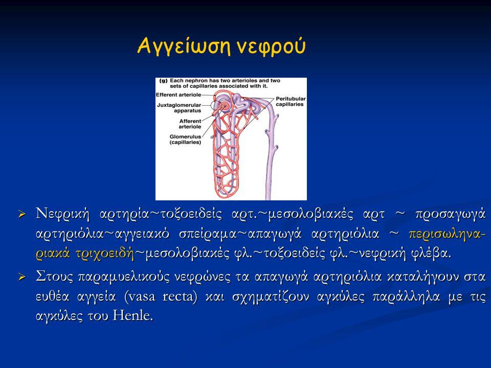 Aγγείωση νεφρού
