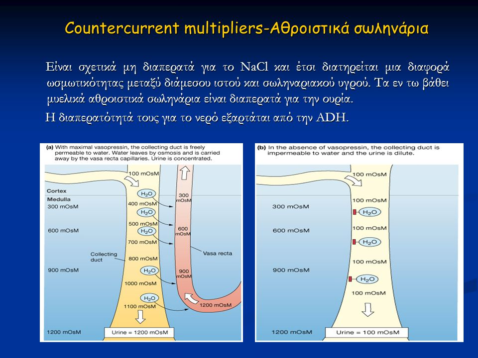 Countercurrent multipliers-Αθροιστικά σωληνάρια