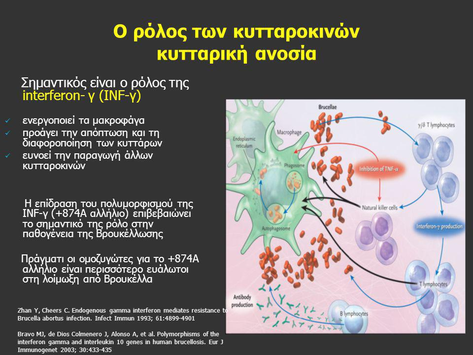 Ο ρόλος των κυτταροκινών κυτταρική ανοσία