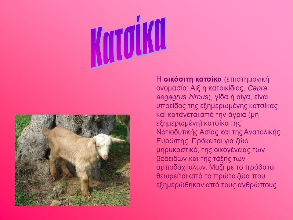 Κατσίκα