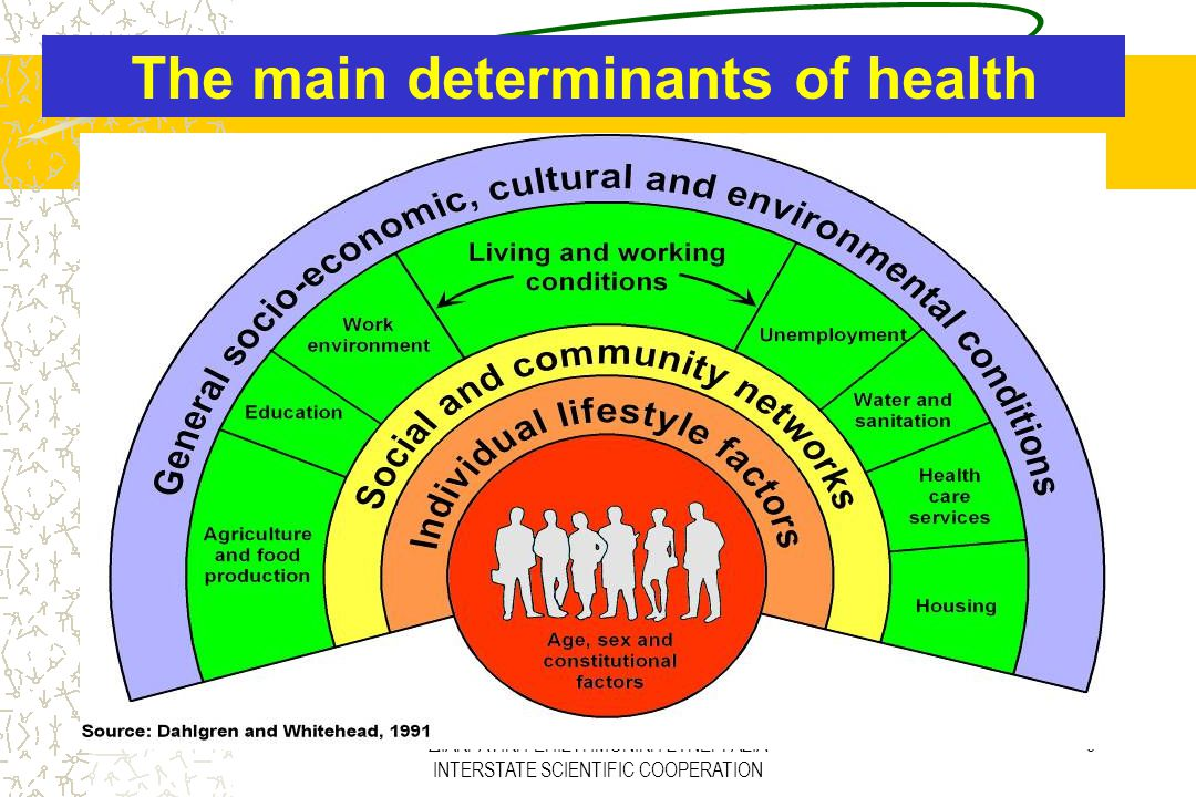The main determinants of health