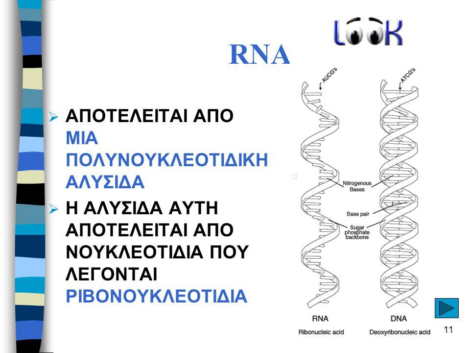 RNA ΑΠΟΤΕΛΕΙΤΑΙ ΑΠΟ MIA ΠΟΛΥΝΟΥΚΛΕΟΤΙΔΙΚH ΑΛΥΣΙΔA