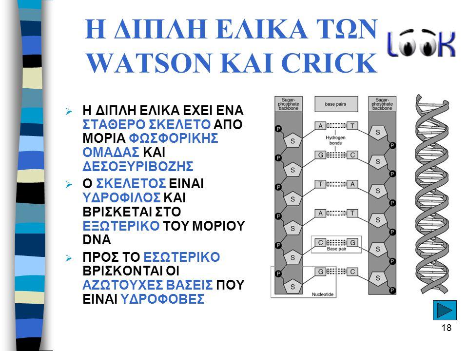Η ΔΙΠΛΗ ΕΛΙΚΑ ΤΩΝ WATSON ΚΑΙ CRICK