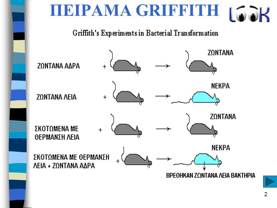 ΠΕΙΡΑΜΑ GRIFFITH