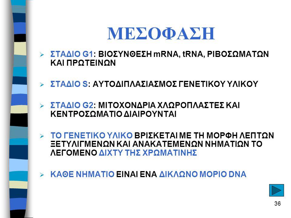 ΜΕΣΟΦΑΣΗ ΣΤΑΔΙΟ G1: ΒΙΟΣΥΝΘΕΣΗ mRNA, tRNA, ΡΙΒΟΣΩΜΑΤΩΝ ΚΑΙ ΠΡΩΤΕΙΝΩΝ