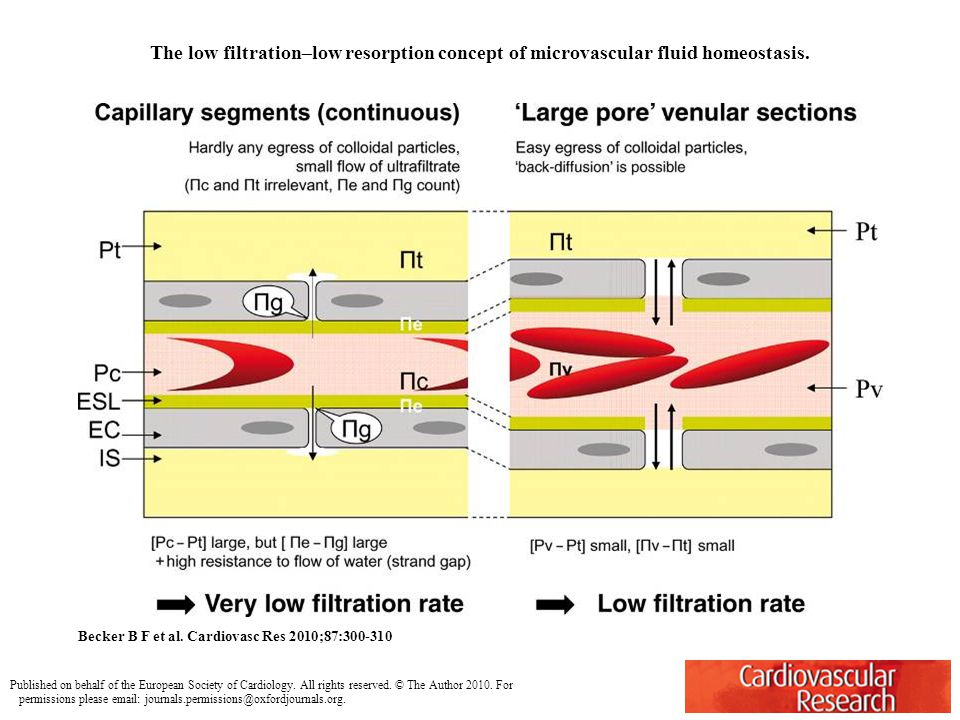 The low filtration–low resorption concept of microvascular fluid homeostasis.