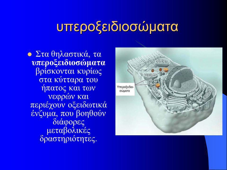 υπεροξειδιοσώματα
