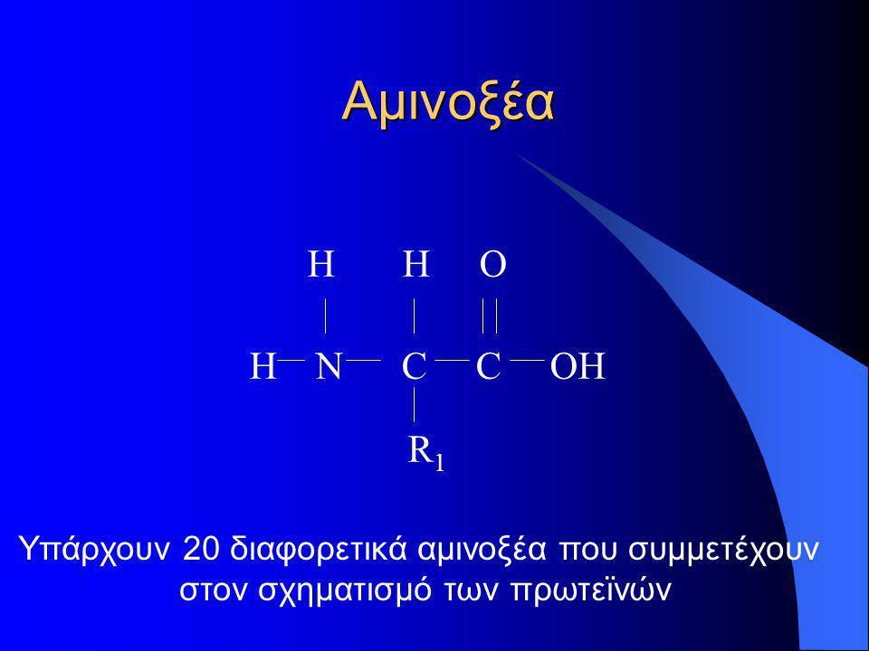 Αμινοξέα H H O. Η Ν C C OH R1. Υπάρχουν 20 διαφορετικά αμινοξέα που συμμετέχουν.