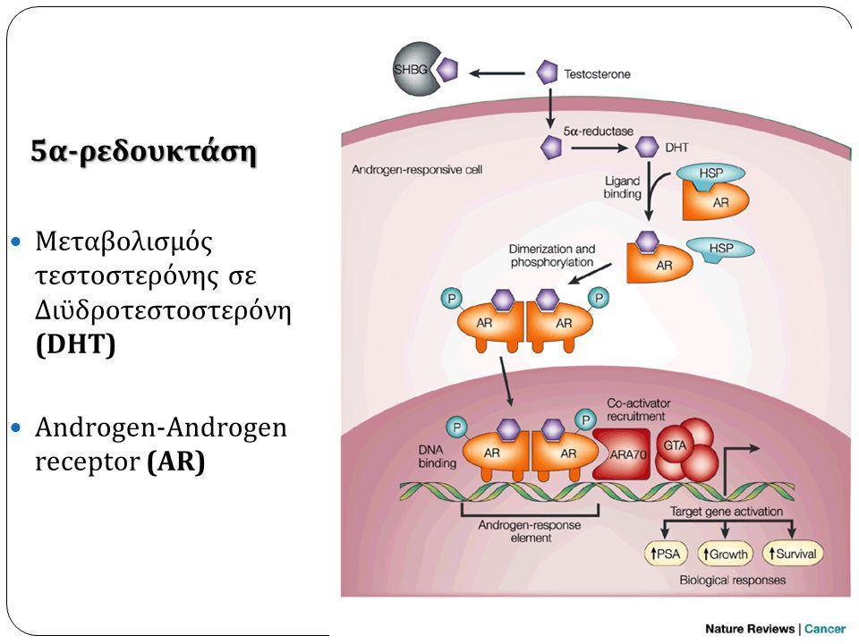 5α-ρεδουκτάση Μεταβολισμός τεστοστερόνης σε Διϋδροτεστοστερόνη (DHT)