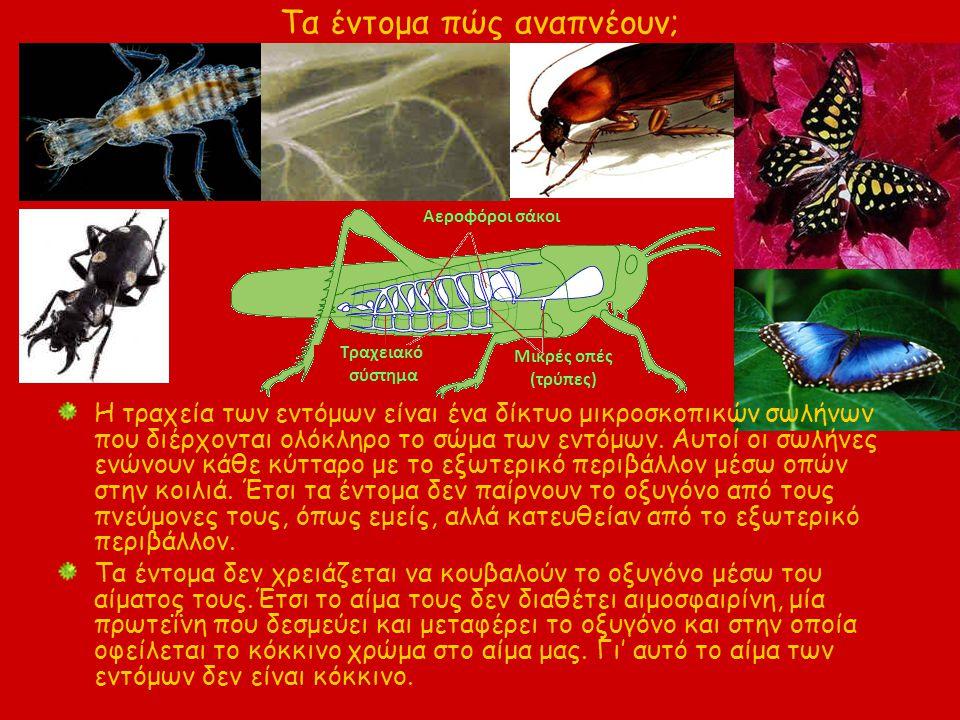 Τα έντομα πώς αναπνέουν;