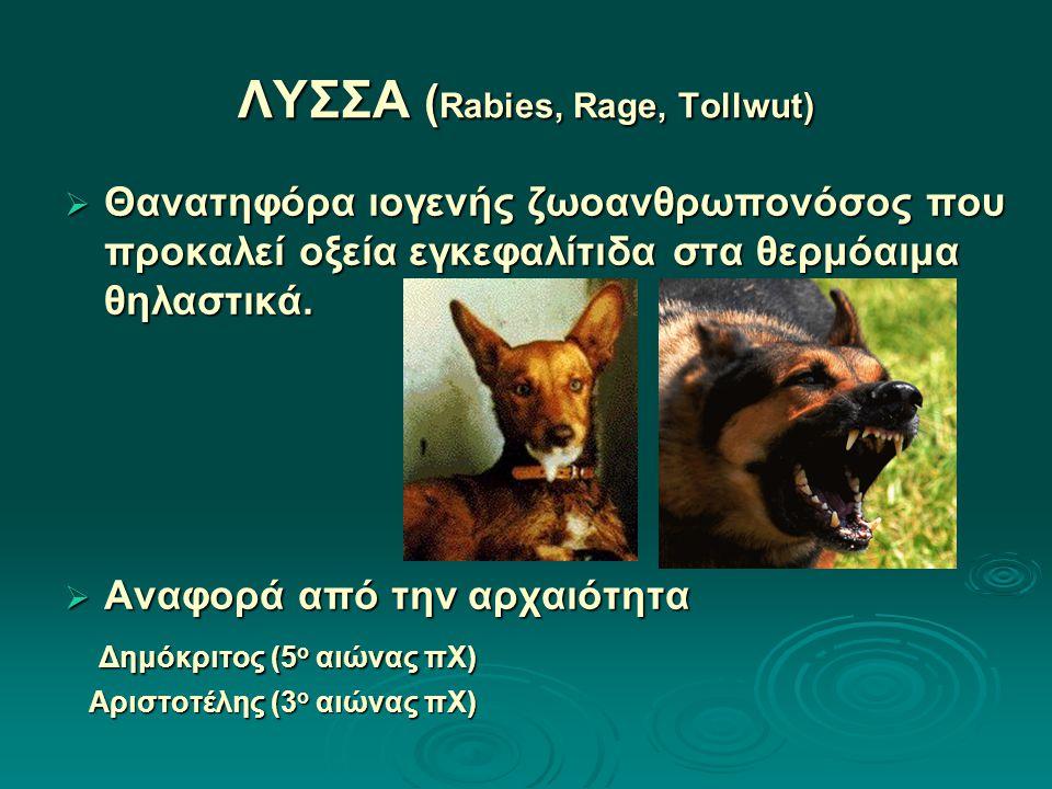 ΛΥΣΣΑ (Rabies, Rage, Tollwut)