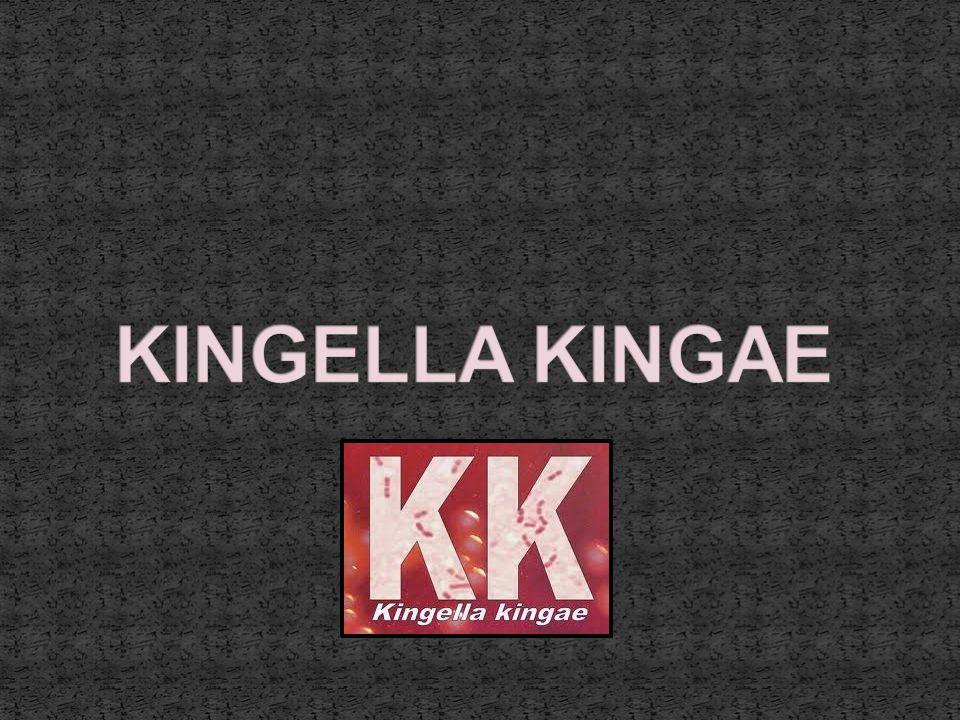KINGELLA KINGAE