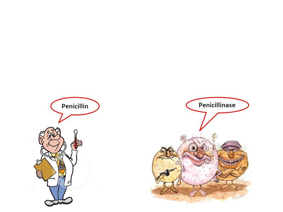 Penicillin Penicillinase