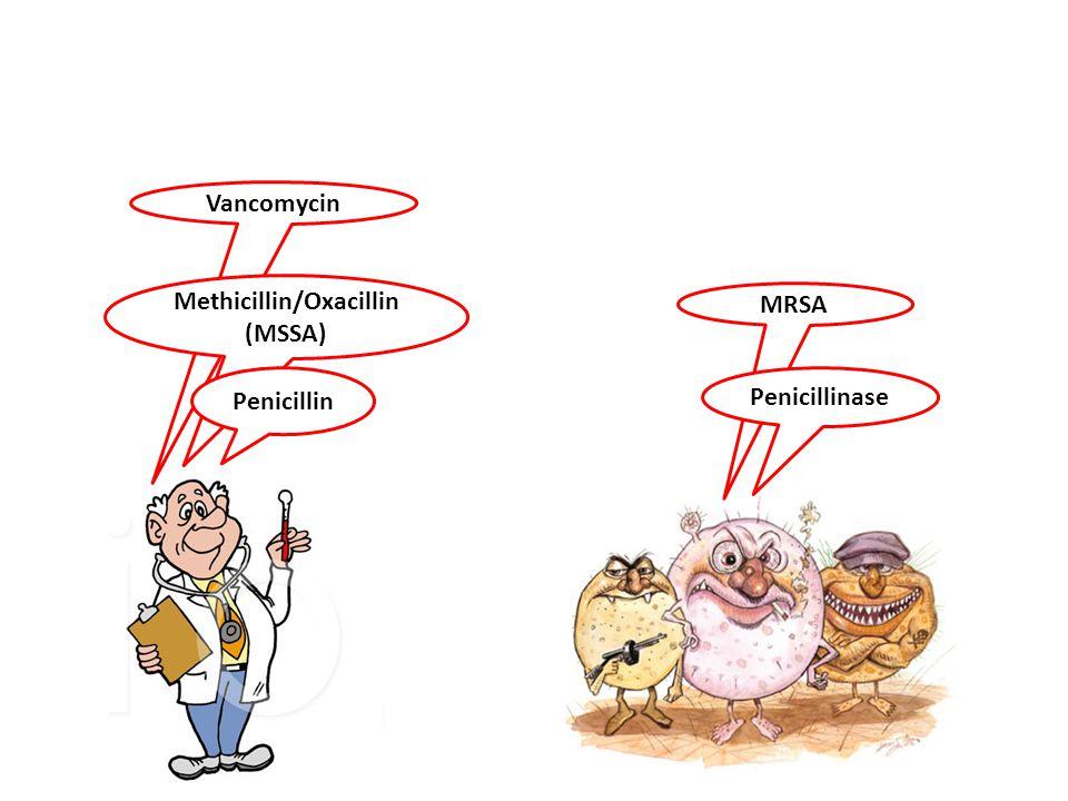 Methicillin/Oxacillin