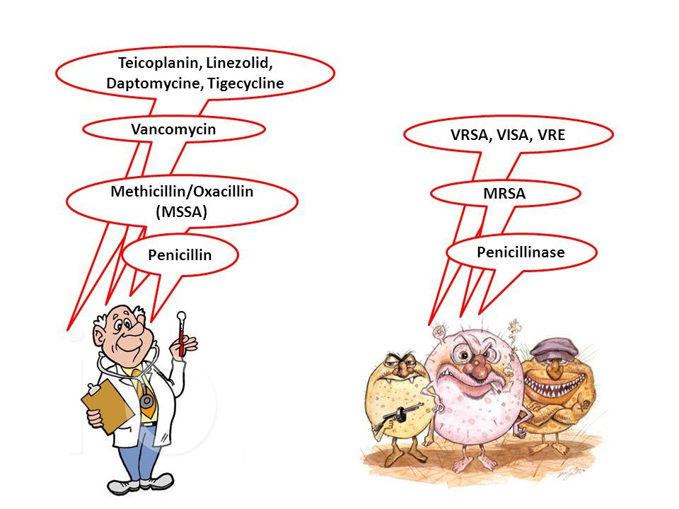 Teicoplanin, Linezolid, Daptomycine, Tigecycline Methicillin/Oxacillin