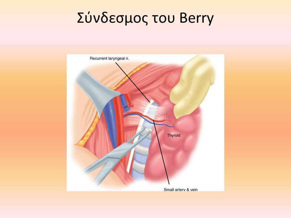 Σύνδεσμος του Berry