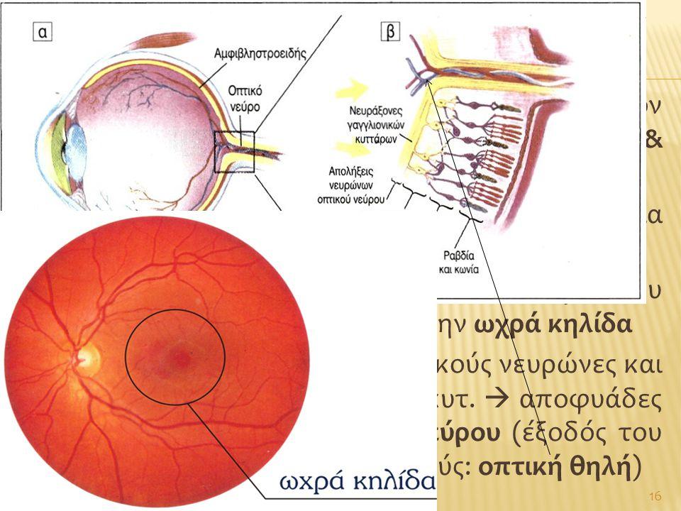 Αμφιβληστροειδησ – οπτικο νευρο