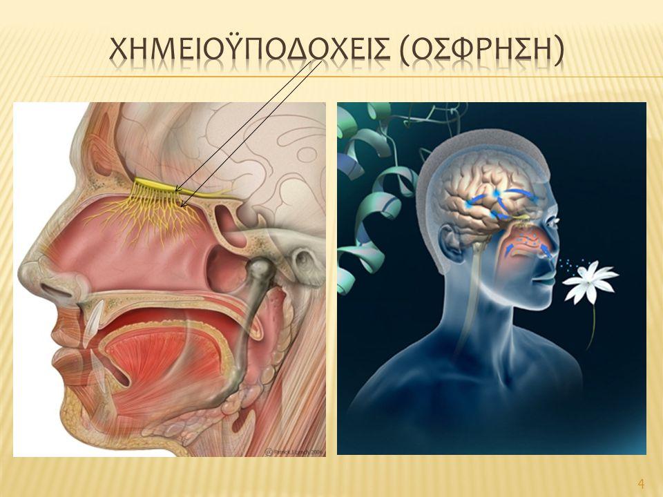 Χημειοϋποδοχεισ (οσφρηση)