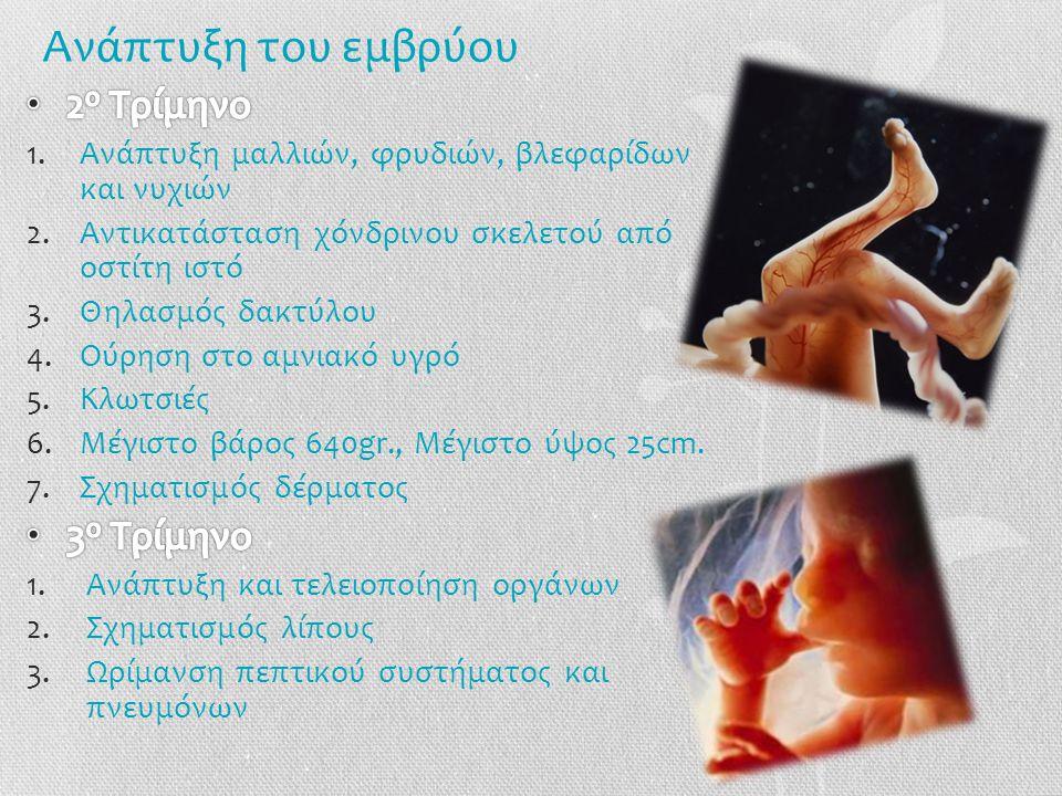 Ανάπτυξη του εμβρύου 2ο Τρίμηνο 3ο Τρίμηνο
