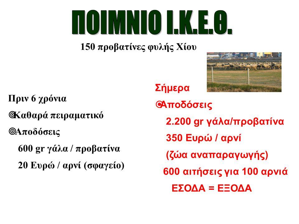 ΠΟΙΜΝΙΟ Ι.Κ.Ε.Θ. 150 προβατίνες φυλής Χίου Σήμερα Πριν 6 χρόνια