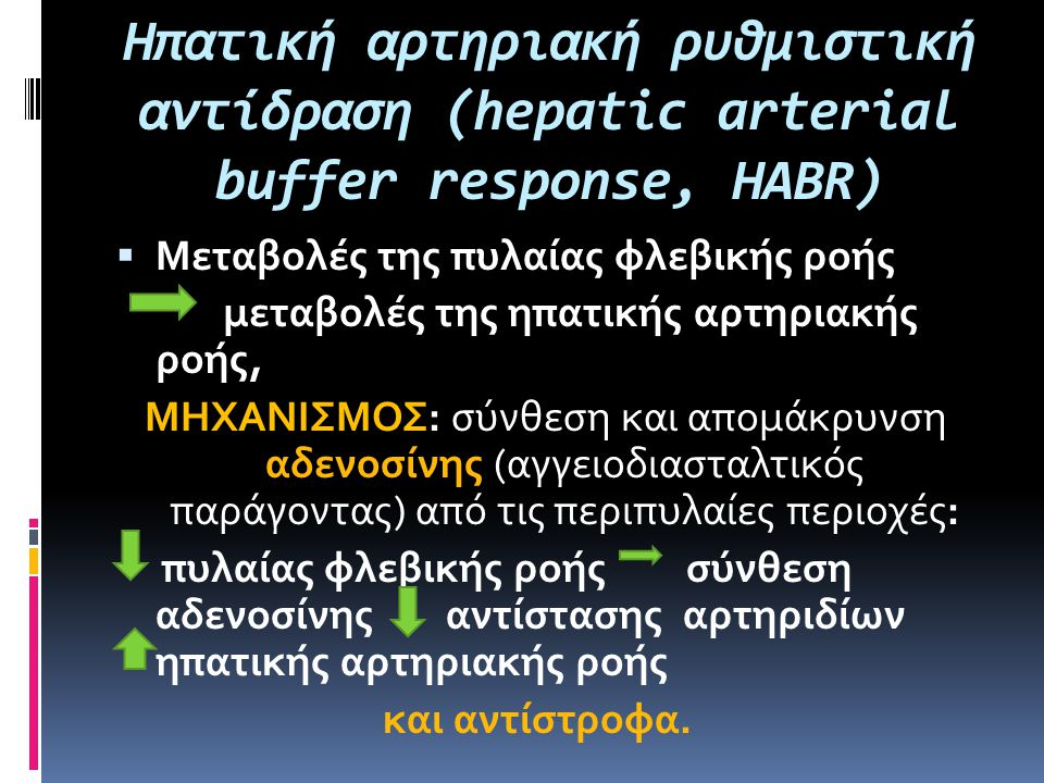 Ηπατική αρτηριακή ρυθμιστική αντίδραση (hepatic arterial buffer response, HABR)