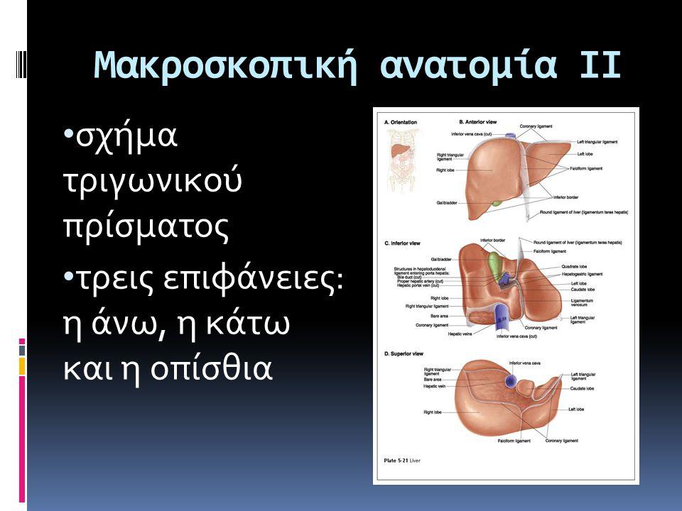 Μακροσκοπική ανατομία ΙΙ