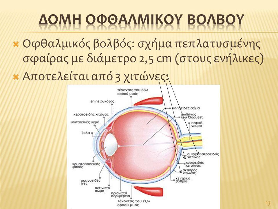 Δομη οφθαλμικου βολβου
