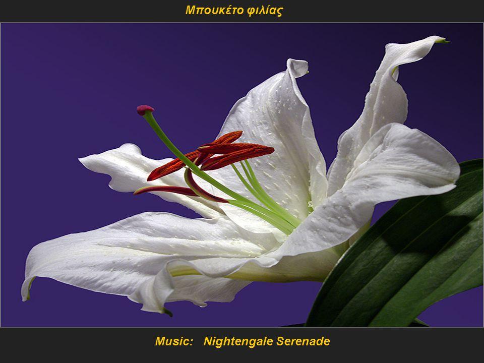 Music: Nightengale Serenade
