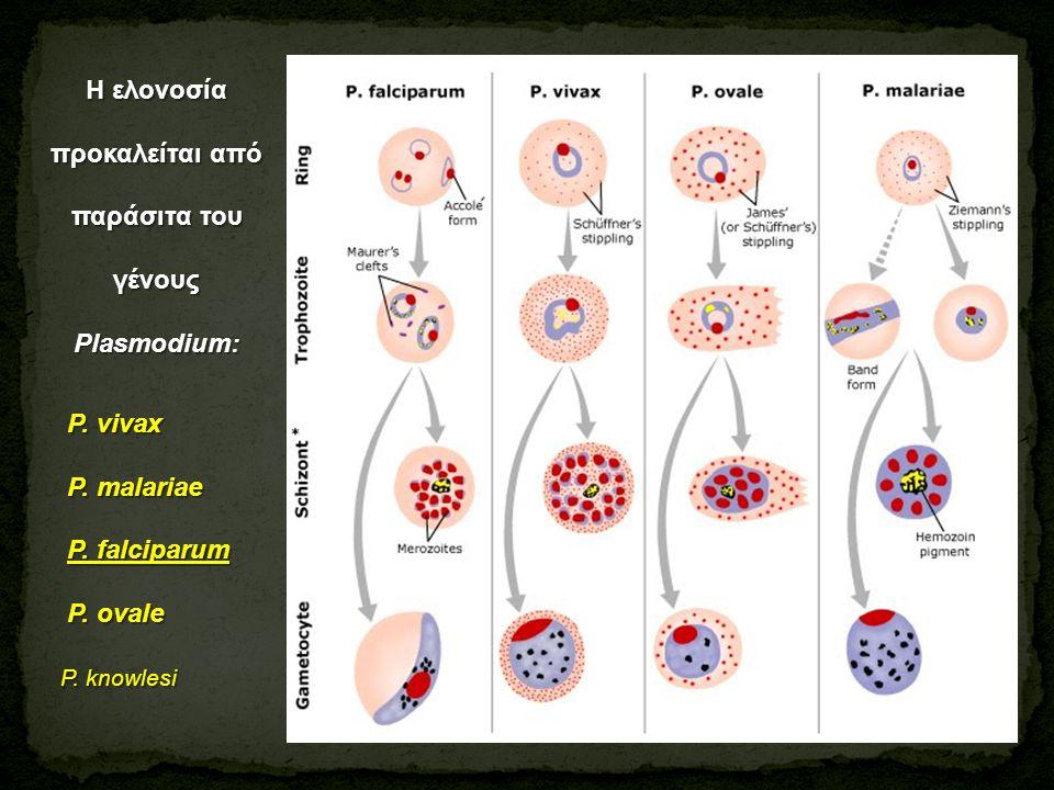 Η ελονοσία προκαλείται από παράσιτα του γένους Plasmodium: