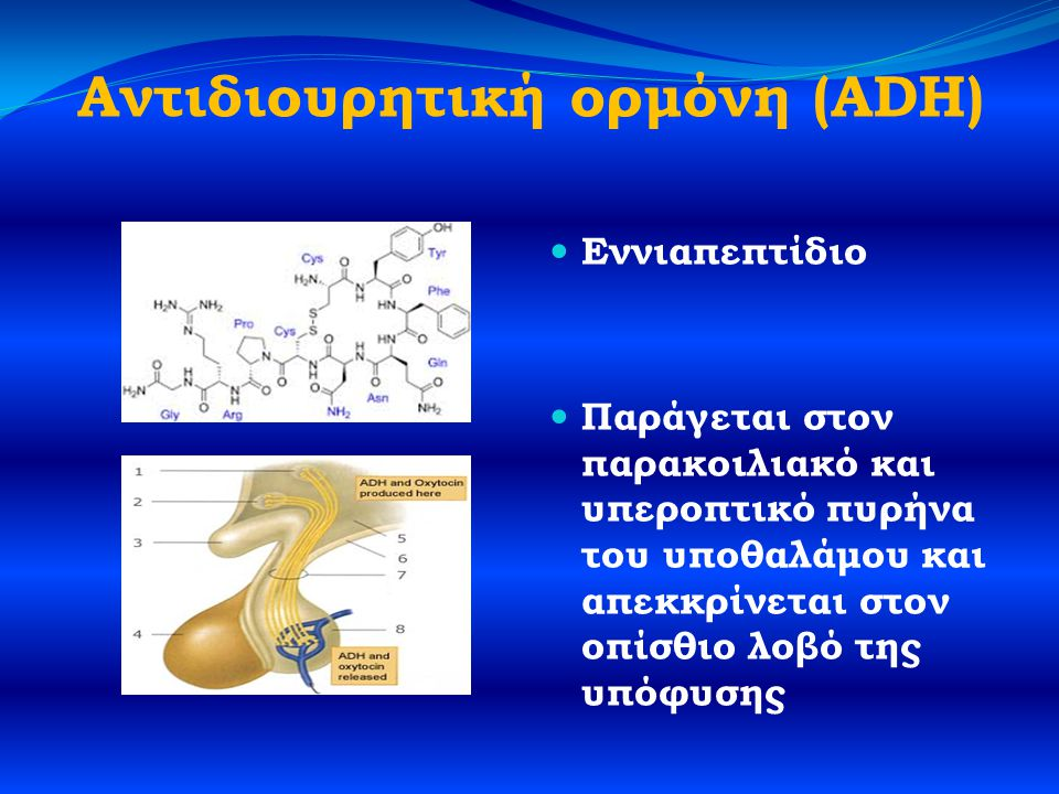 Αντιδιουρητική ορμόνη (ADH)