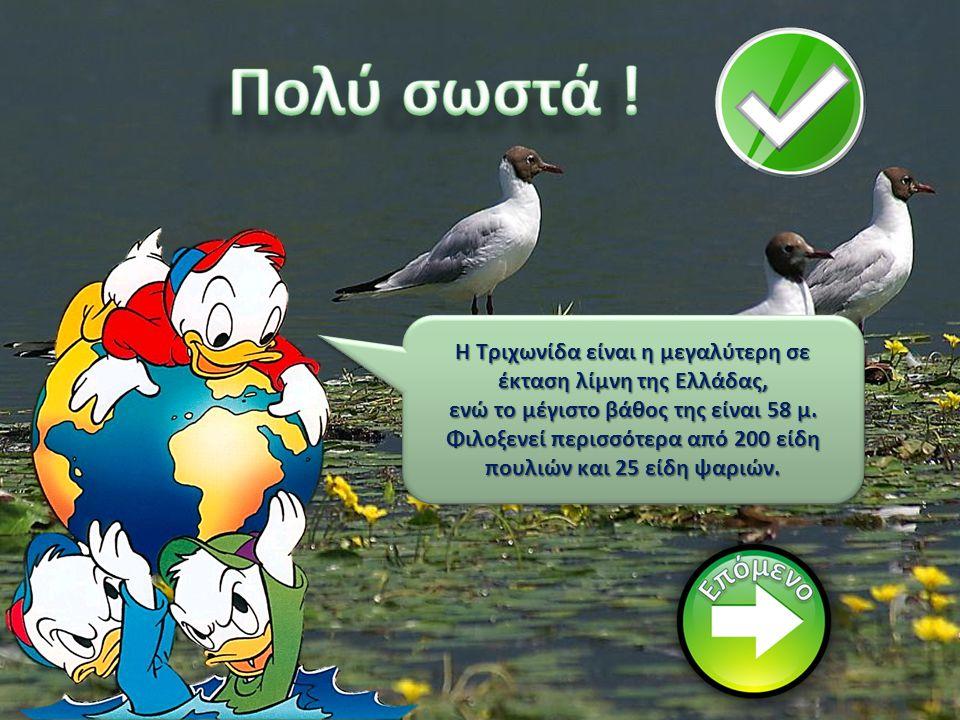 Πολύ σωστά ! Η Τριχωνίδα είναι η μεγαλύτερη σε έκταση λίμνη της Ελλάδας, ενώ το μέγιστο βάθος της είναι 58 μ.