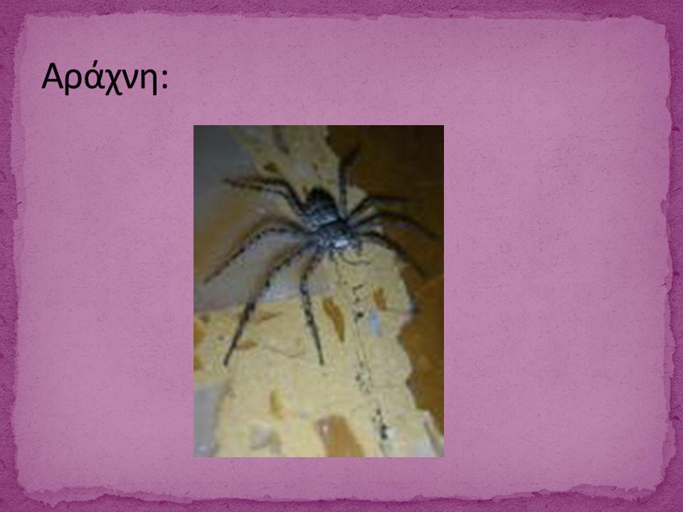 Αράχνη: