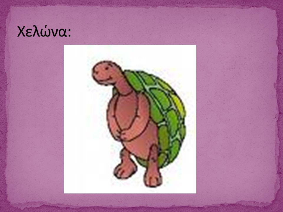 Χελώνα: