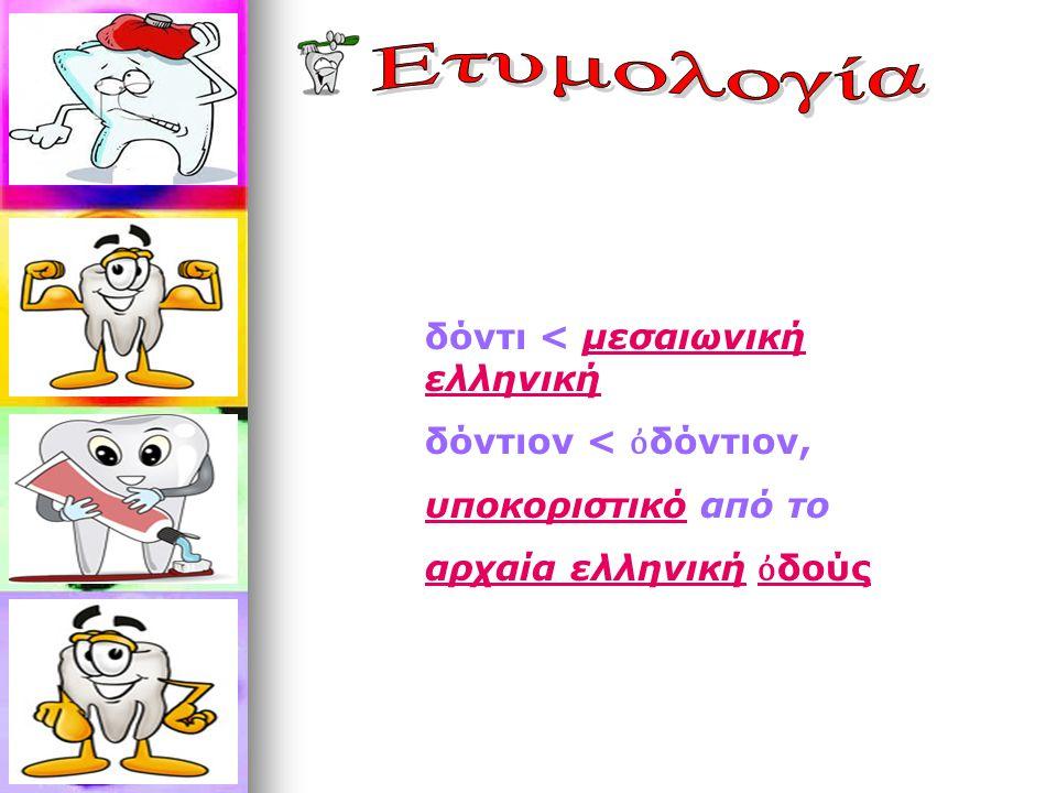 Ετυμολογία δόντι < μεσαιωνική ελληνική δόντιον < ὀδόντιον,