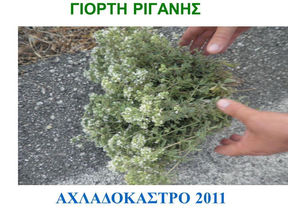 ΓΙΟΡΤΗ ΡΙΓΑΝΗΣ ΑΧΛΑΔΟΚΑΣΤΡΟ 2011