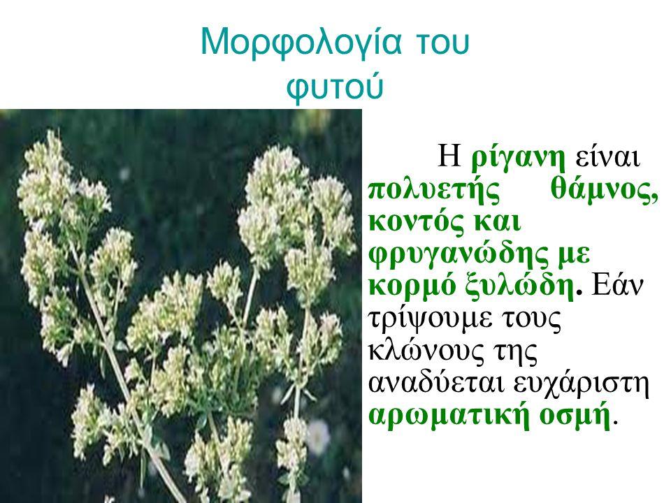 Μορφολογία του φυτού