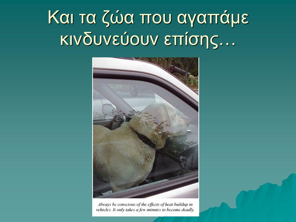Και τα ζώα που αγαπάμε κινδυνεύουν επίσης…