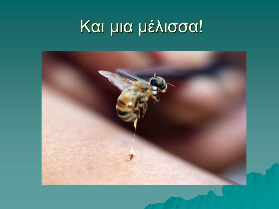 Και μια μέλισσα!