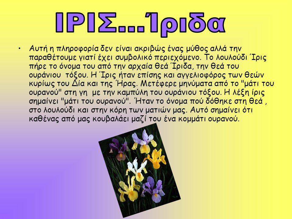 ΙΡΙΣ...Ίριδα
