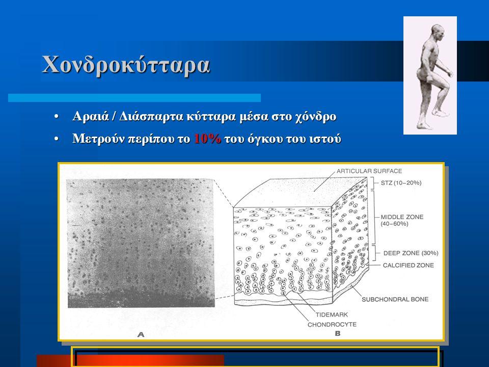 Χονδροκύτταρα Αραιά / Διάσπαρτα κύτταρα μέσα στο χόνδρο