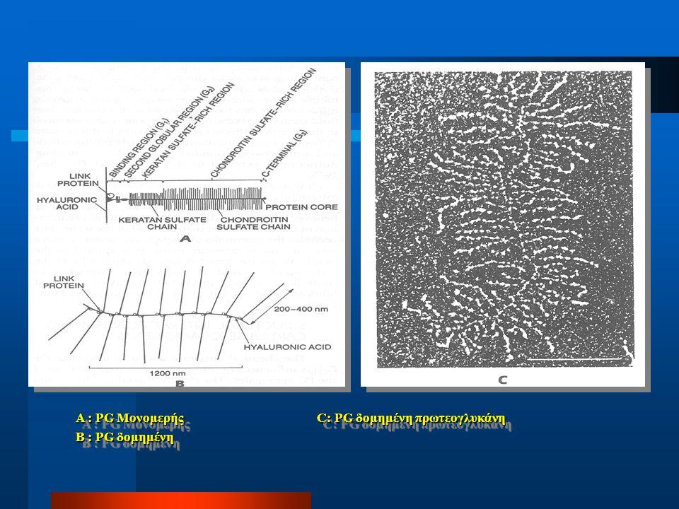 A : PG Μονομερής C: PG δομημένη πρωτεογλυκάνη