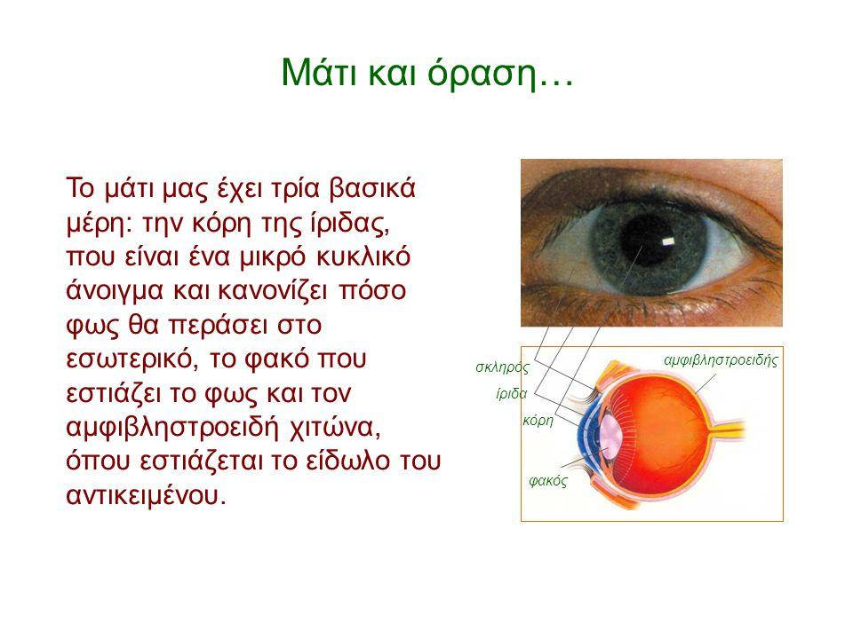 Μάτι και όραση… αμφιβληστροειδής. κόρη. σκληρός. φακός. ίριδα.
