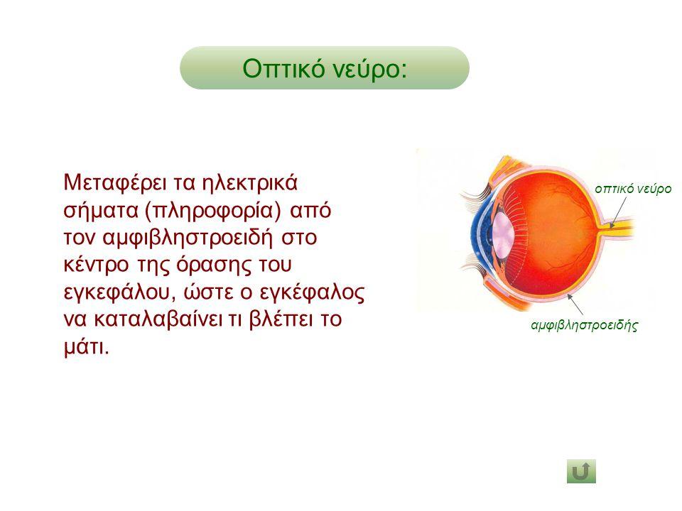 Οπτικό νεύρο: οπτικό νεύρο. αμφιβληστροειδής.