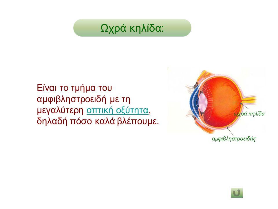 Ωχρά κηλίδα: αμφιβληστροειδής. ωχρά κηλίδα.