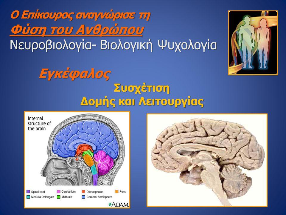 Νευροβιολογία- Βιολογική Ψυχολογία