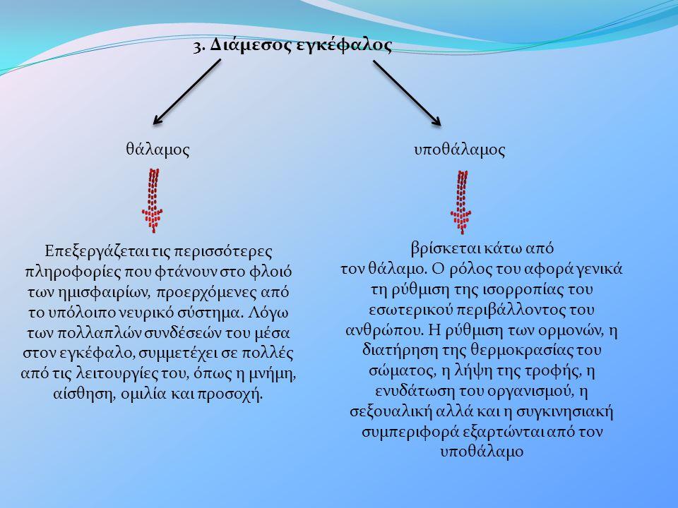 3. Διάμεσος εγκέφαλος θάλαμος. υποθάλαμος.
